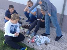 Šolski kostanjev piknik na Pragerskem